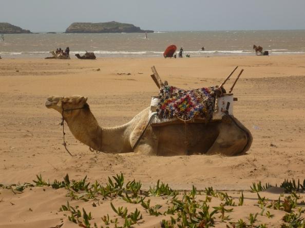 Esa Camel low