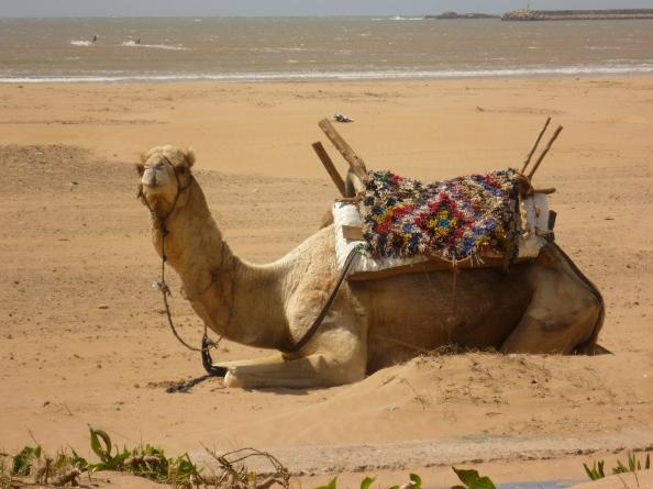Esa Camel