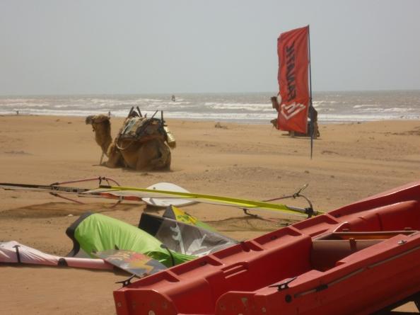 Esa camel bottom