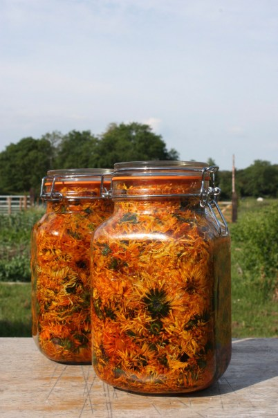 Lyonsleaf macerating calendula