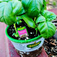 Easy Garden Markers and Home Depot Gift Card Giveaway