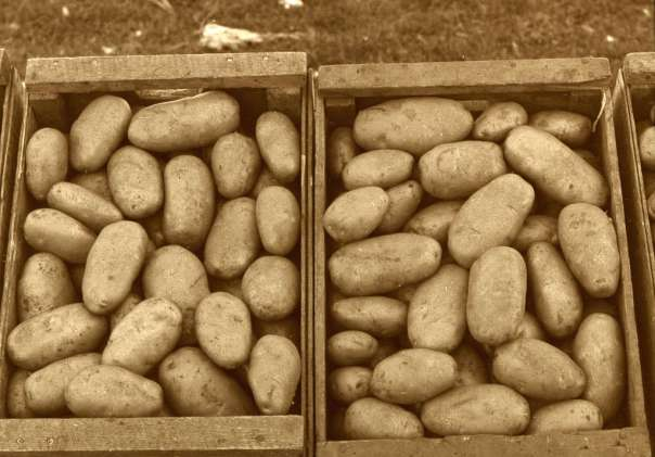 By Provincial Archives of Alberta (Crates of potatoes) [No restrictions], via Wikimedia Commons