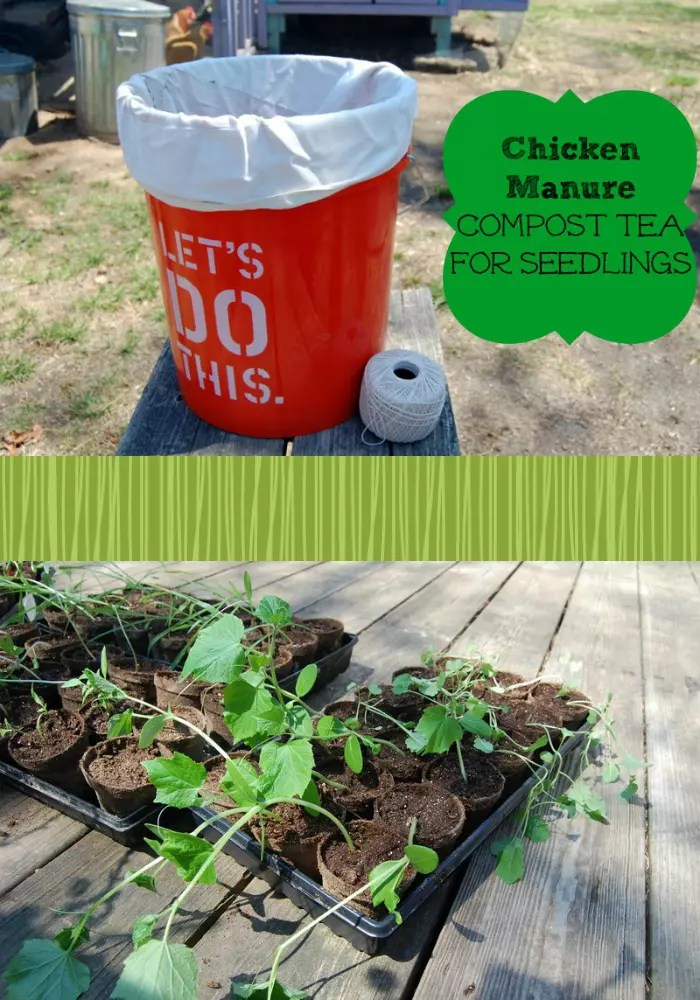 skip the chemical fertilizers and make up some manure tea - Chicken Manure