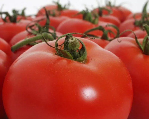 Top tips for a huge tomato harvest