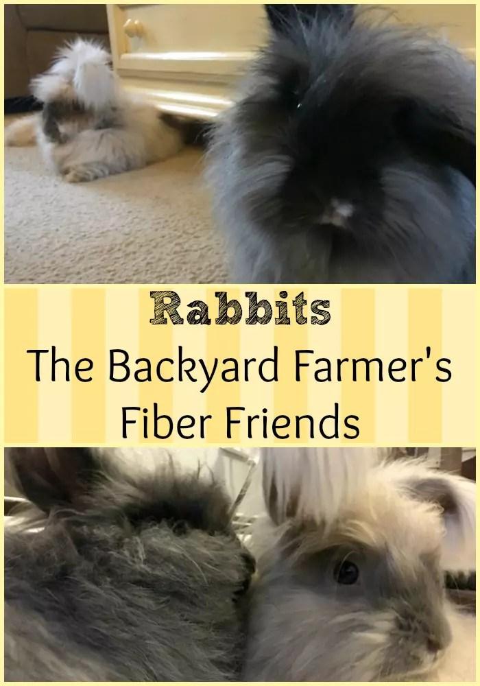 Rabbits - The Backyard Farmer's Fiber Friend