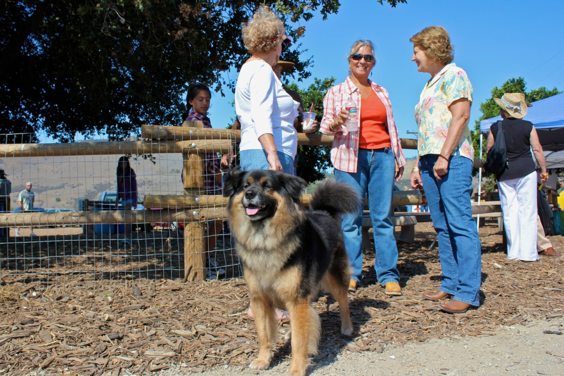 San Juan Capistrano residents and their dogs gathered in the city's northwest open space Saturday for the grand opening of the Dr. Joe Cortese Dog Park. Photo by Brian Park