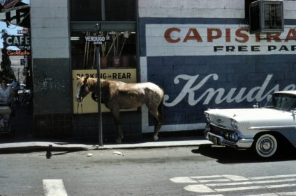 Pictured is a horse on the corner of Verdugo Street and Camino Capistrano in San Juan Capistrano, circa 1960. Photo: Courtesy of Orange County Archives