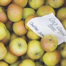 Cox's Orange Pippin Apples