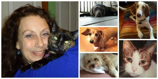 Manchester Pet Sitter and Pets Collage
