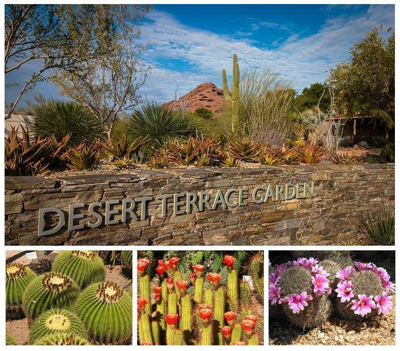 Desert Botanical Garden Free Admission On Tuesday October 13th The Centsable Shoppin