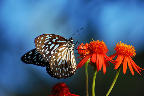 When a Butterfly Flaps its Wings, Give Thanks