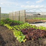 Menu – Farm – Vegetable Garden