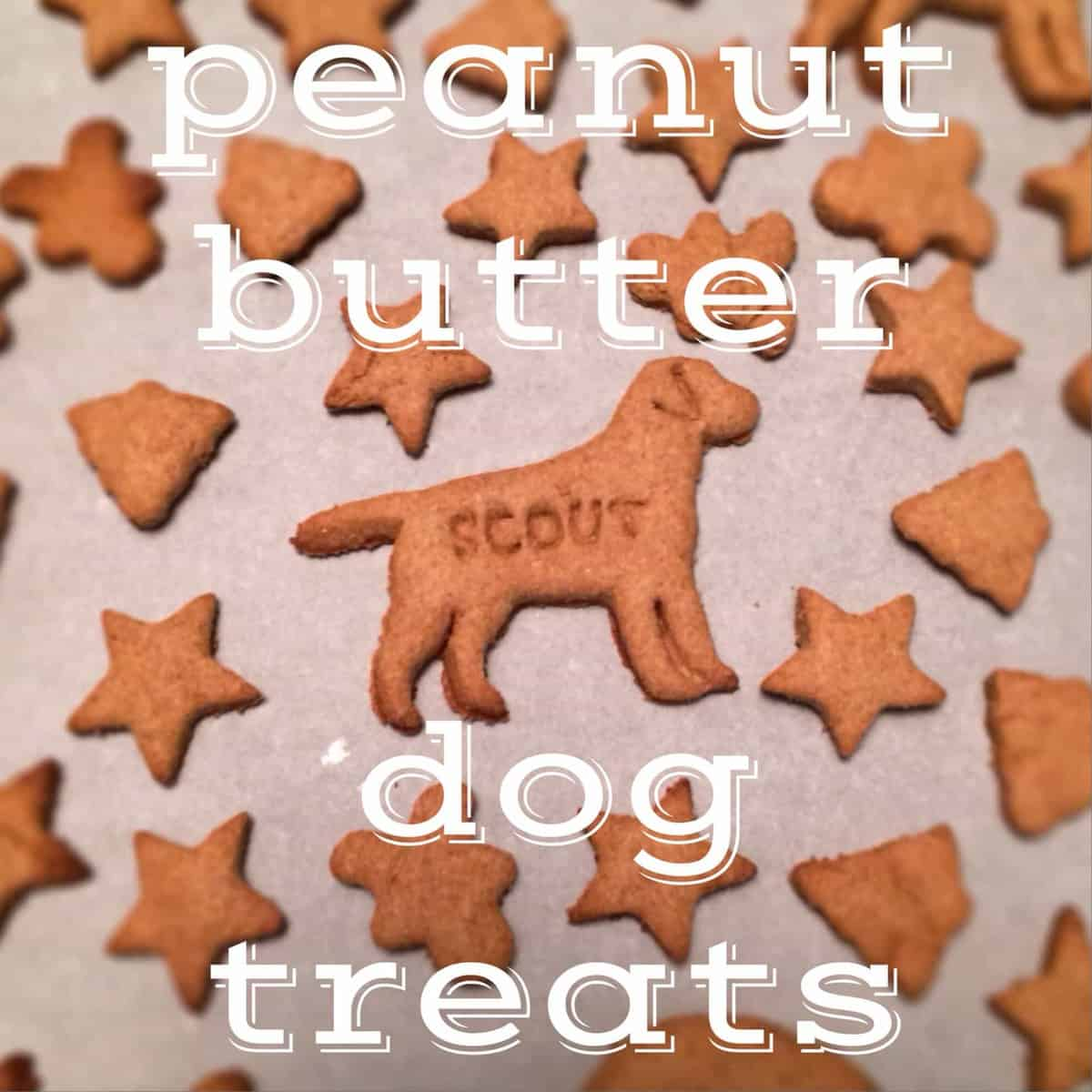Fullsize Of Grain Free Dog Treat Recipes