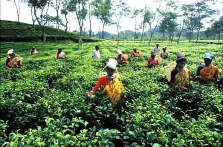 Bengali Language, banaladesh agriculture