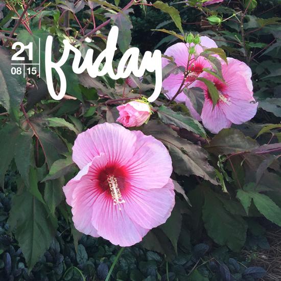 Friday WITL 1