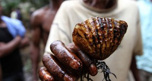 What you did not know about Shell in Ogoniland
