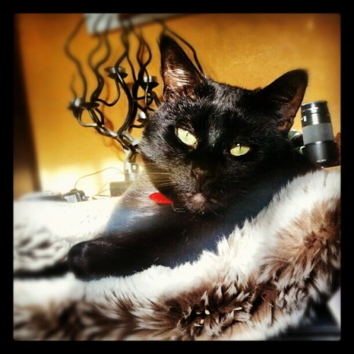 Warmest sun and a snuggly fur blanket. What could be nicer on a cold day? #catlovers #catstagram #cat #catsinthesun #petstagram #catsofinstagram #blackcats