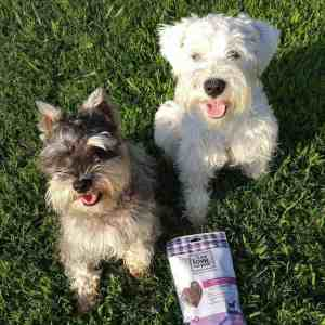 Keeping My Dogs Healthy and Happy with I and Love and You