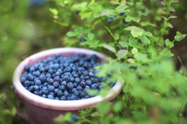 Winter Garden Maintenance Upcoming Trends Year Ahead