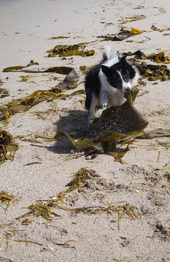 SEAWEED MULCH EXPLAINED