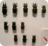 insect-pin-board.jpg