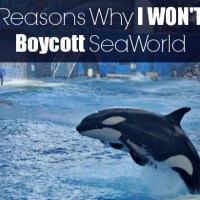 Reasons Why I Won't Be Boycotting SeaWorld