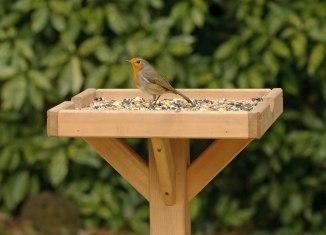 feed garden birds