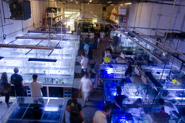aquarium store for sale aquarium stores ct aquariums ct