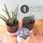 Top Five Plants for a Black Thumb | Home Coming for thegirlcreative.com