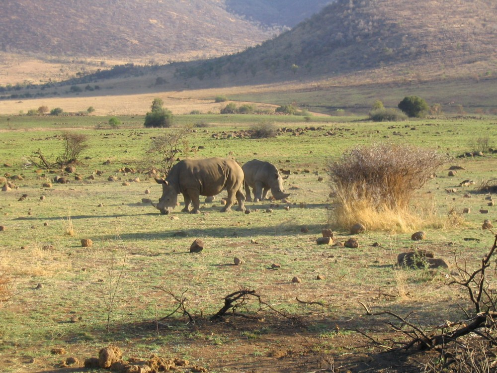 South african safari photos pilanesberg national park the give