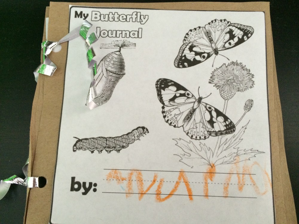 Butterfly Theme