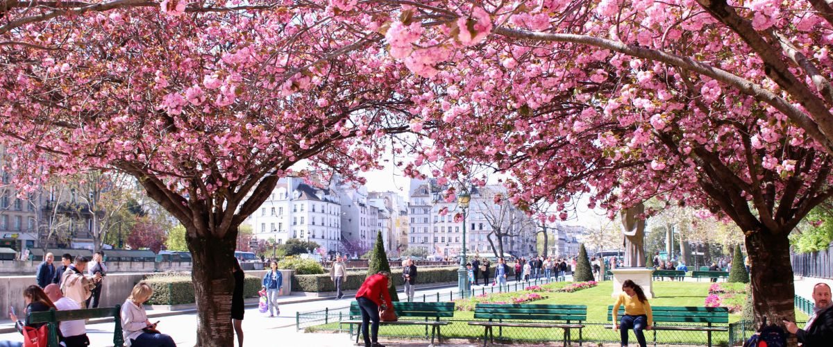 The Complete Guide to Blossom Season in Paris