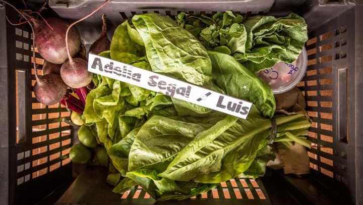 Que tal ser um coprodutor de orgânicos? Conheça sistema que beneficia produtores e consumidores