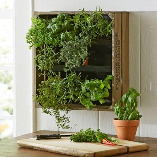 Inspiring Wine Crate Vertical Wall Garden Wine Crate Vertical Wall Garden Green Head Vertical Wall Herb Garden