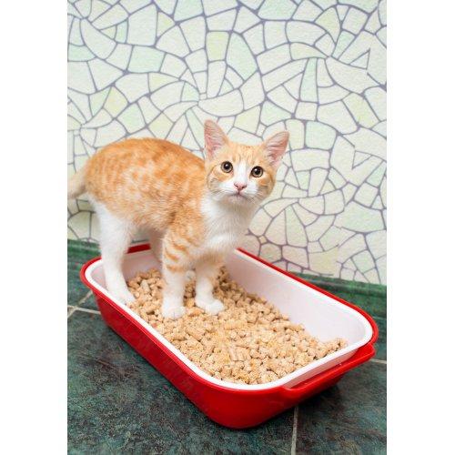 Medium Crop Of Coconut Cat Litter