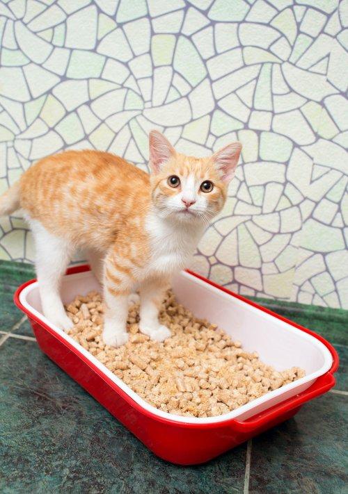 Medium Of Coconut Cat Litter