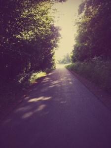 Morning Walks - 2
