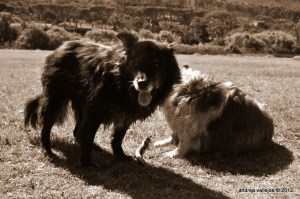 Mishka and Macky