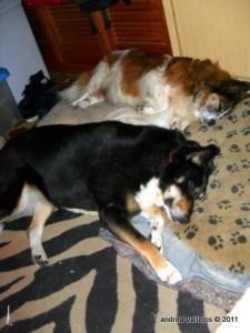 Happy sleeping mutts