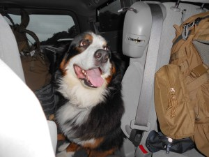Adventure Dog Gina - Bernese Mountain Dog
