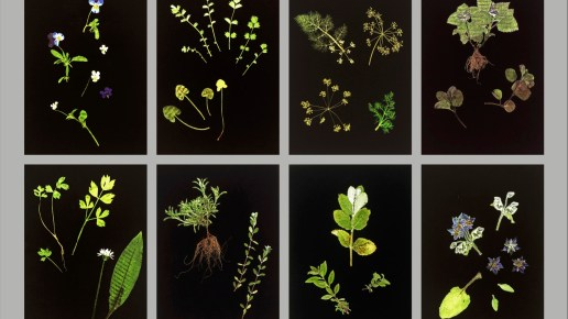 Herbier * // May 16 // To the framers // Herb Garden at The Marksman for Chelsea Fringe