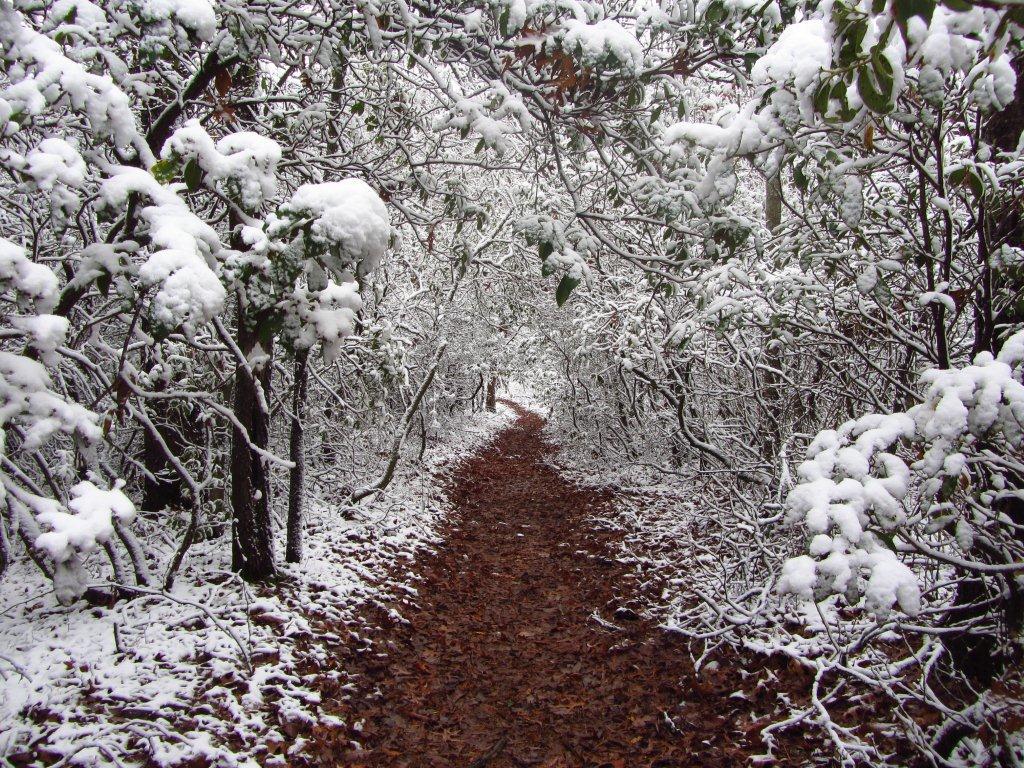 Benton Mackaye Trail | Georgia, 2011