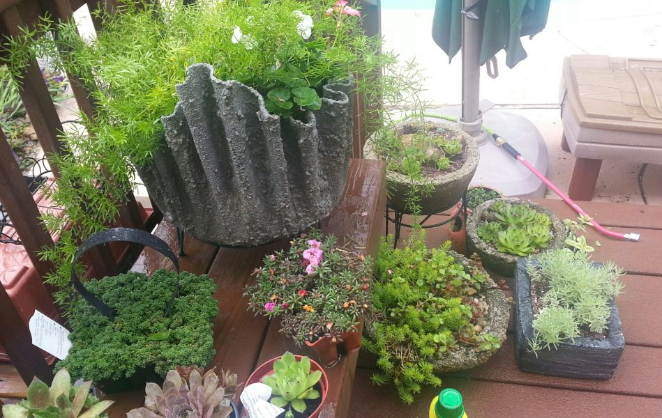 Photo of some of my hypertufa planters - Cloth cement plant pots ...
