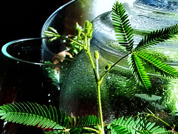 Let 39 s try terrariums this winter for indoor gardening for Indoor gardening during winter