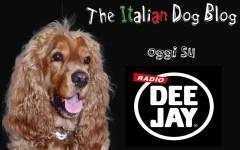 #radiodeejay