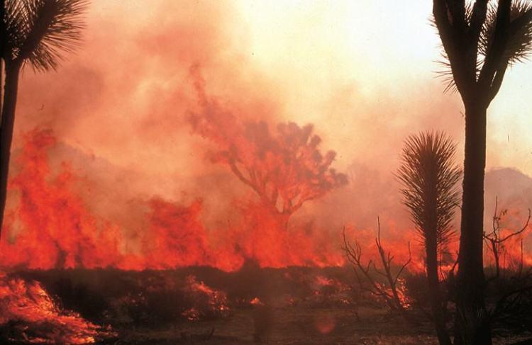 Wildfire at Joshua Tree  NPS Photo
