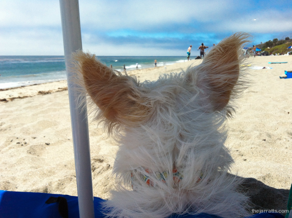 Pretty easy to hear the ocean with these (windblown) ears!