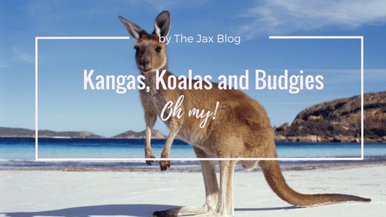 Kangas, koalas and budgies oh my - The jax Blog