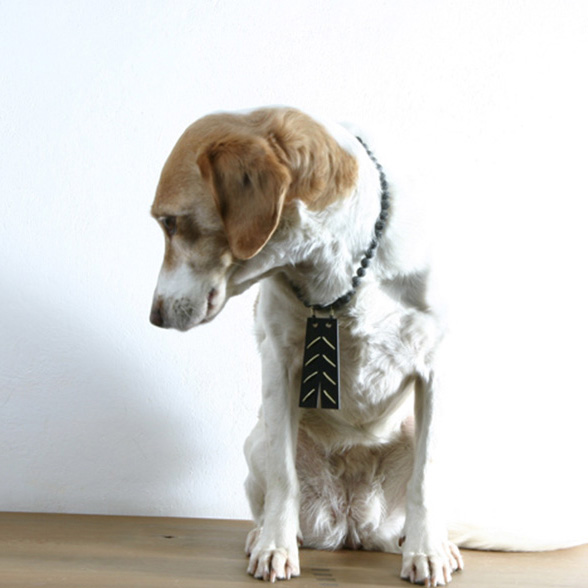 Dog with jewellery