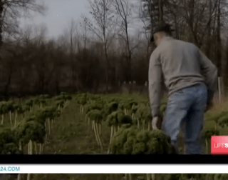 The Kale Project_France 24